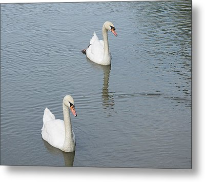 Swans Drifting Along Metal Print by Corinne Elizabeth Cowherd