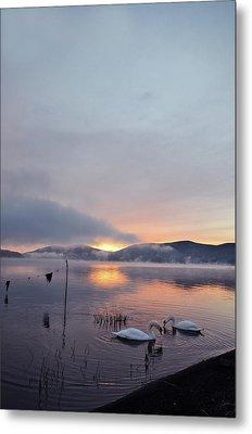 Swans In Lake At Sunrise Metal Print by I Z U M I N I A