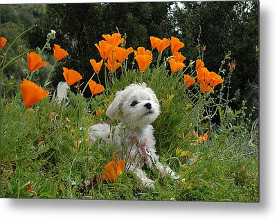 Sweet Sunshine Metal Print by Lynn Bauer