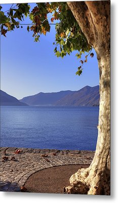 sycamore tree at the Lake Maggiore Metal Print by Joana Kruse