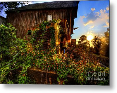 Tactor Overgrown With Flowers And Weeds At Sunset Metal Print by Dan Friend
