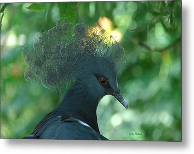 Take The Red Eye Metal Print by Donna Blackhall