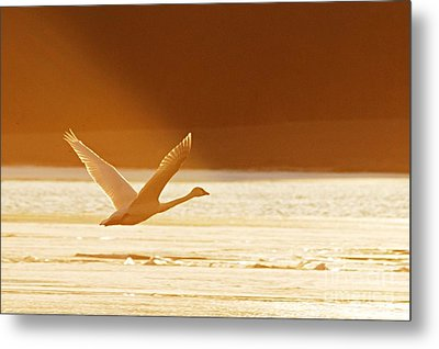 Takeoff At Sunset Metal Print by Larry Ricker