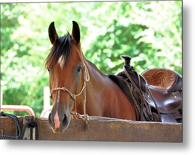 Taking A Break Metal Print by Jan Amiss Photography