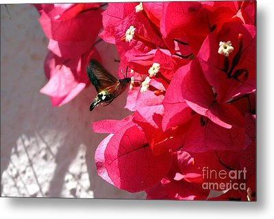 Taking The Nectar Metal Print by John Chatterley