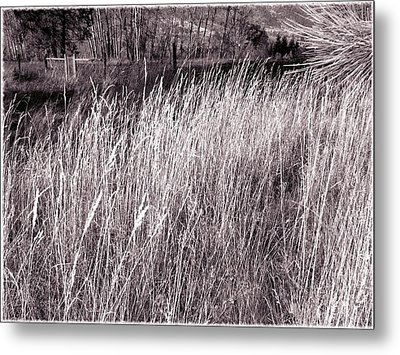 Tall Grasses Metal Print by Will Borden