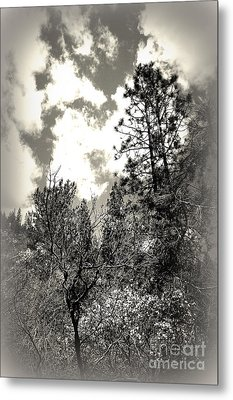 Tall Trees In Lake Shasta Metal Print by Garnett  Jaeger