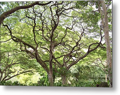 Tangled Hawaiian Tree Metal Print by Deborah Cummins