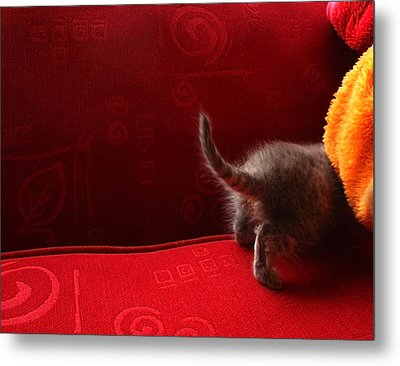 The Absent-minded Kitten Metal Print by Barbara  White