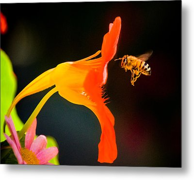 The Bee Metal Print by Mickey Clausen