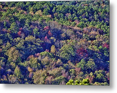 The Colors Of Autumn Metal Print by Douglas Barnard