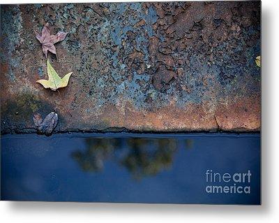 The Garden Pond Metal Print by Steven Gray