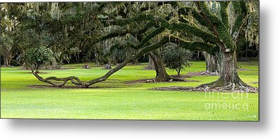 The Giving Tree Metal Print by Scott Pellegrin
