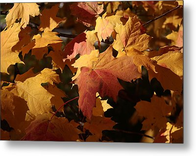 The Golden Days Of October Metal Print by Lyle Hatch