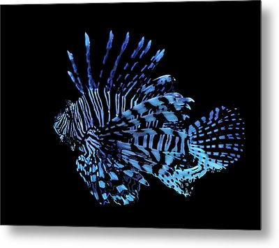 The Lionfish 3 Metal Print by Robin Hewitt