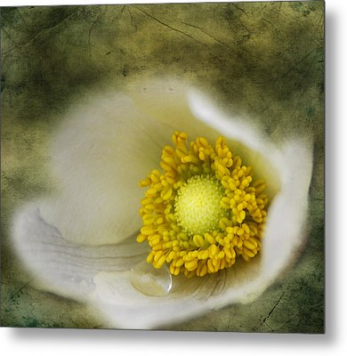 The One Tear That Held  Metal Print by JC Photography and Art