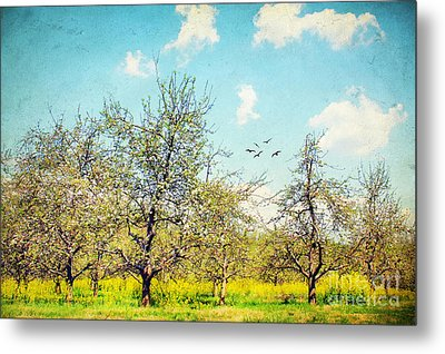 The Orchard Metal Print by Darren Fisher