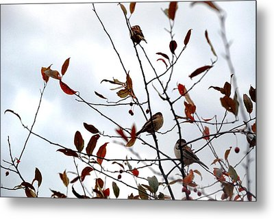 The Perfect Perch Metal Print by Jennifer Russo