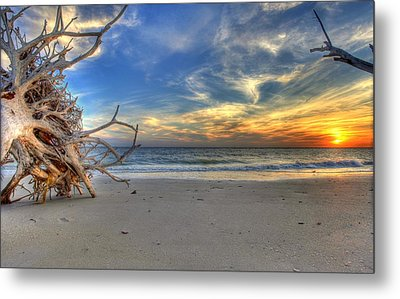 The Root Of Sunshine Metal Print by Sean Allen