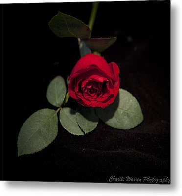 The Rose Metal Print by Charles Warren