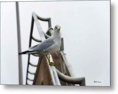 The Seagull Metal Print by Bill Cannon