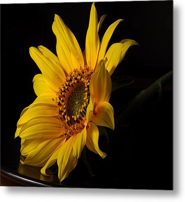 The Sun Flower  Metal Print by Davor Sintic