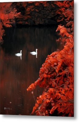 The Swan Pair Metal Print by Bill Cannon