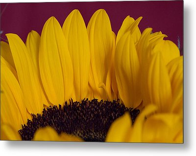 The Yellow Blossom Leaves Metal Print by Andreas Levi