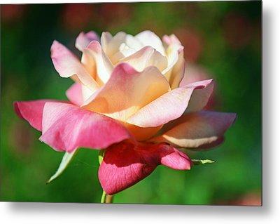 Thorns Have Roses Metal Print by Melanie Moraga