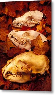 Three Animal Skulls Metal Print by Garry Gay