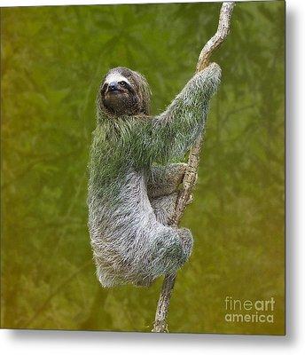Three-toed Sloth Climbing Metal Print by Heiko Koehrer-Wagner