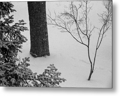 Three Trees In Snow Metal Print by Simone Hester