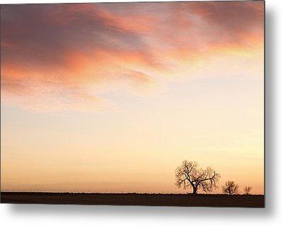 Three Trees Sunrise Sky Landscape Metal Print by James BO  Insogna