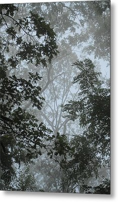 Through The Trees Metal Print by