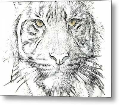 Tiger Metal Print by Tilly Williams