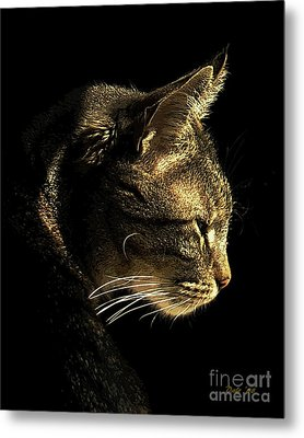 Tiger Within Metal Print by Dale   Ford
