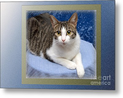 Tilly My Muse Metal Print by Andee Design