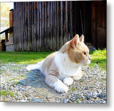 Toby Old Mill Cat Metal Print by Sandi OReilly