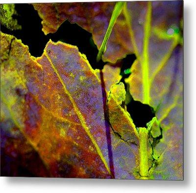 Torn Leaf Metal Print by Marie Jamieson