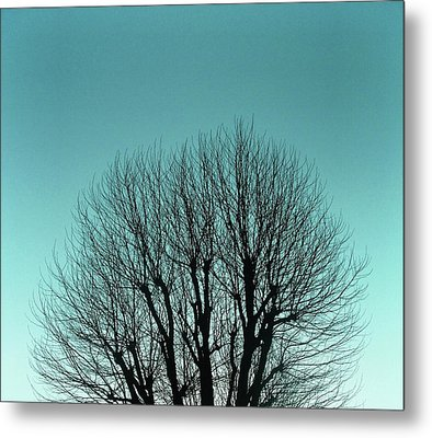 Tree And Sky Metal Print by Richard Newstead