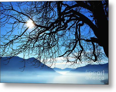 Tree Branches And Sun Metal Print by Mats Silvan
