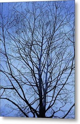 Tree In Winter Metal Print by Andrew King