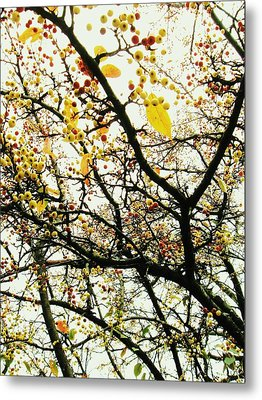 Tree With Buds Metal Print by Todd Sherlock