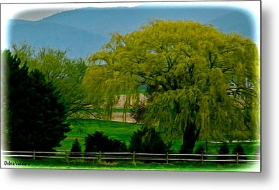 Trees Gulp In The Color Metal Print by Debra     Vatalaro