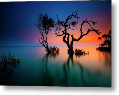 Trees In Bay At Sunset Metal Print by Visionandimagination.com