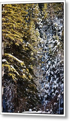 Trees In Taos Village Metal Print by Lisa  Spencer