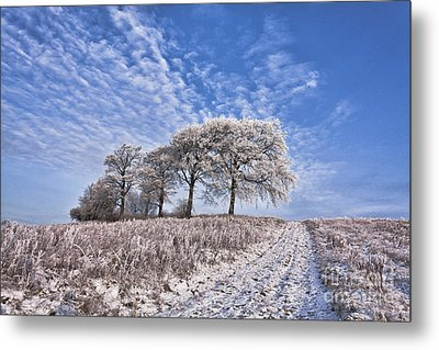 Trees In The Snow Metal Print by John Farnan