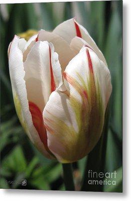 Triumph Tulip Named Carnaval De Rio Metal Print by J McCombie