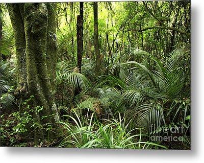 Tropical Jungle Metal Print by Les Cunliffe
