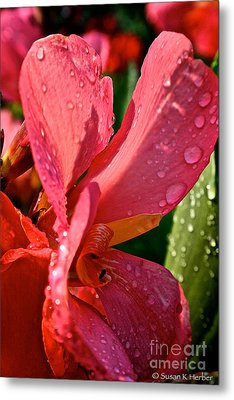 Tropical Rose Canna Lily Metal Print by Susan Herber